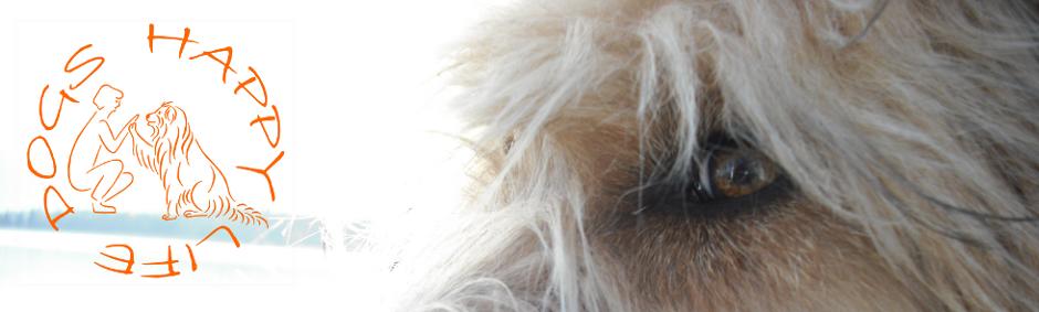 Dogs Happy Life - Hundeschule und mehr